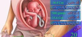 هفته بیست بارداری